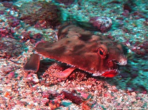 Photos sous-marines de la croisière Cocos