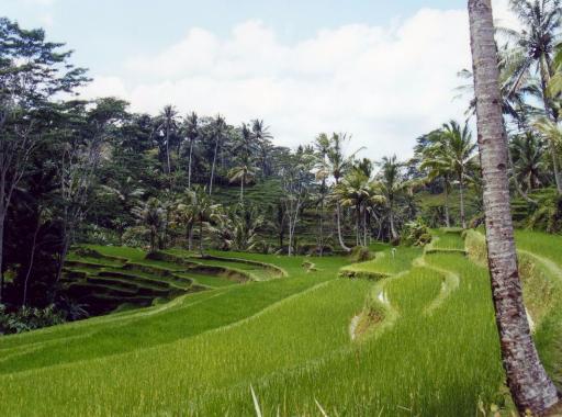 """Photos de notre séjour au Club Med de """"Bali"""""""