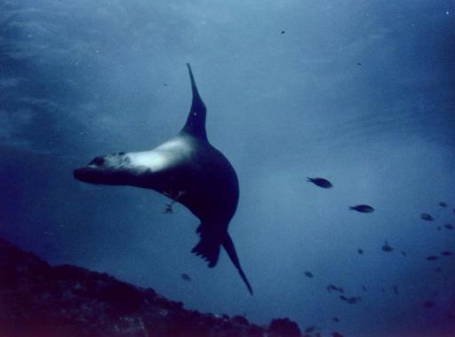"""Photos terrestres et sous-marines de notre séjour au Club Med de """"Sonora Bay"""" en mer de Cortez."""