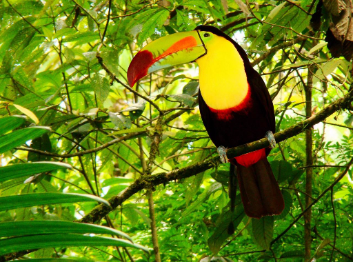 Photos des oiseaux exotiques.