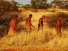 Vidéo dans le Kalahari