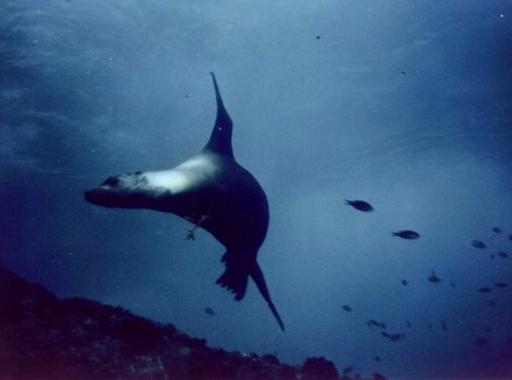 Photos de notre séjour au Club Med de Sonora Bay en mer de Cortez